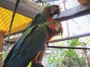 Birds in the aviary of M.A.R.S.