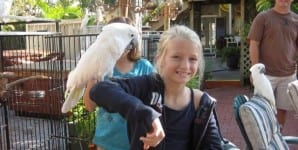 Blond-Girl-Cockatiel